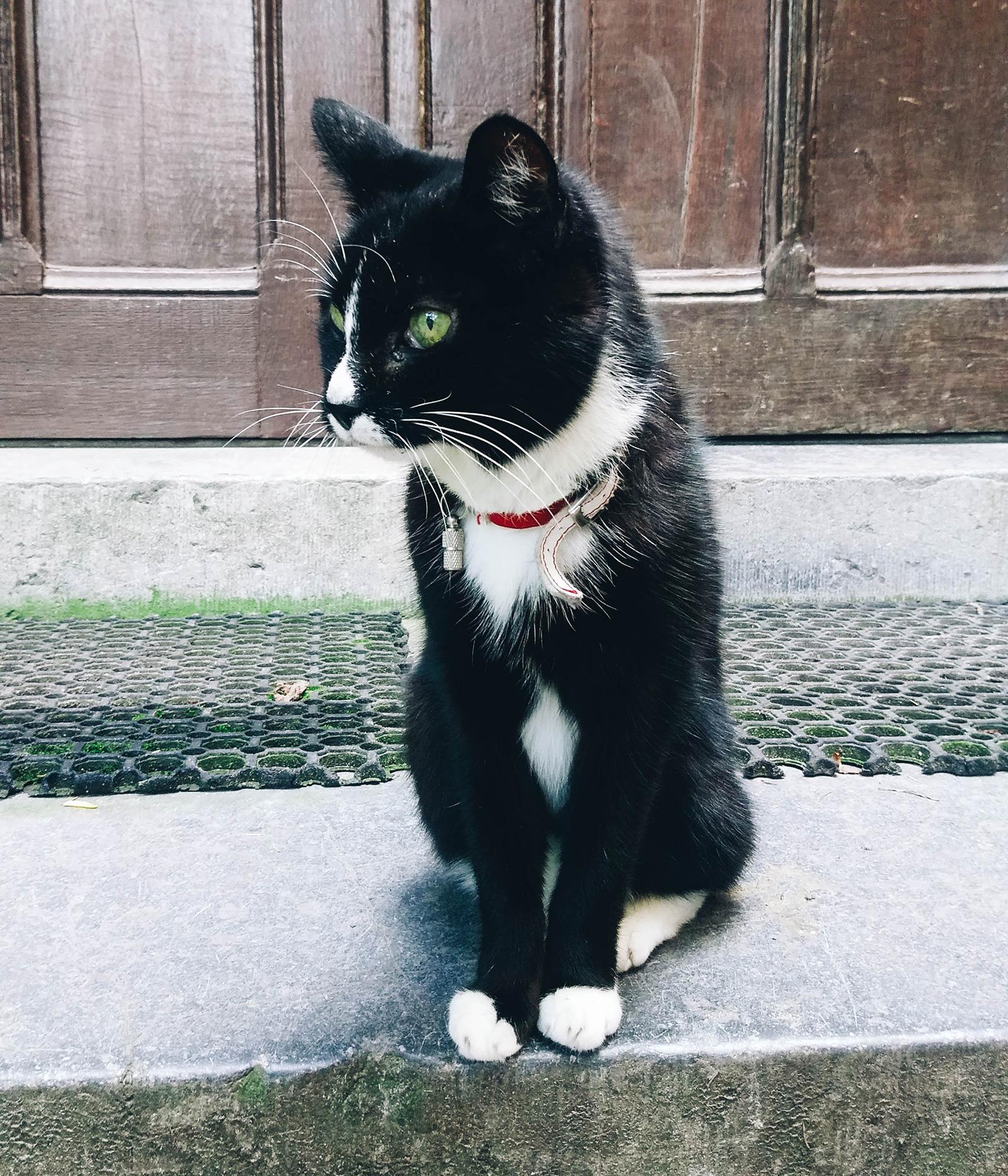 acourseindying_nijmegen_cemetery_ubbergen_refter_cat_03-2